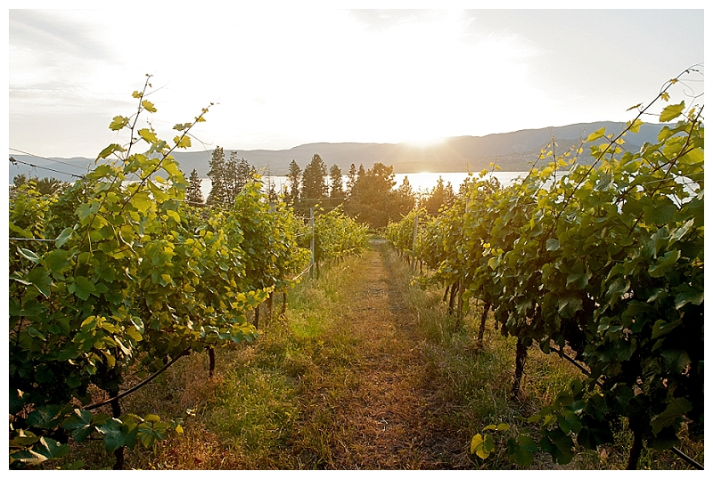 bertramcreek-summerhill-kelowna-wedding-photographer_0186